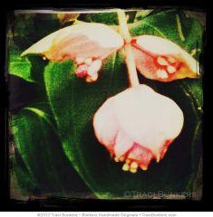 TraciBunkers.com-Exotic Bloom